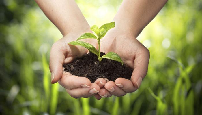 Verde è salute | giornata mondiale dell'ambiente 2021